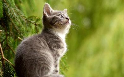 Alltså katter!