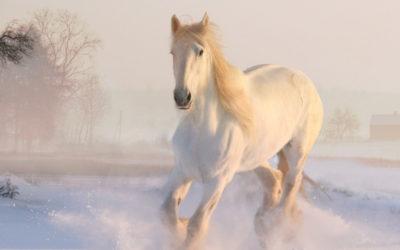 Visst är hästar vackra?
